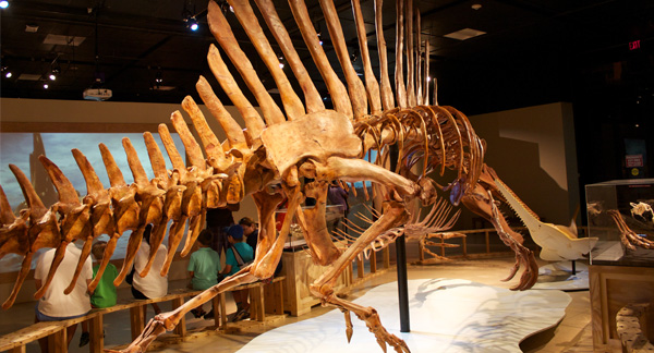 Spinozaur dinozaur